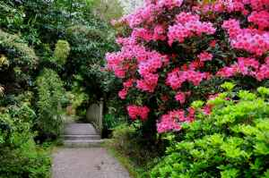 Treng gardens